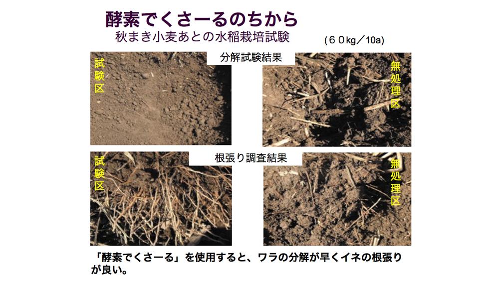 酵素でくさ~るのちから 秋まき小麦あとの水稲栽培試験