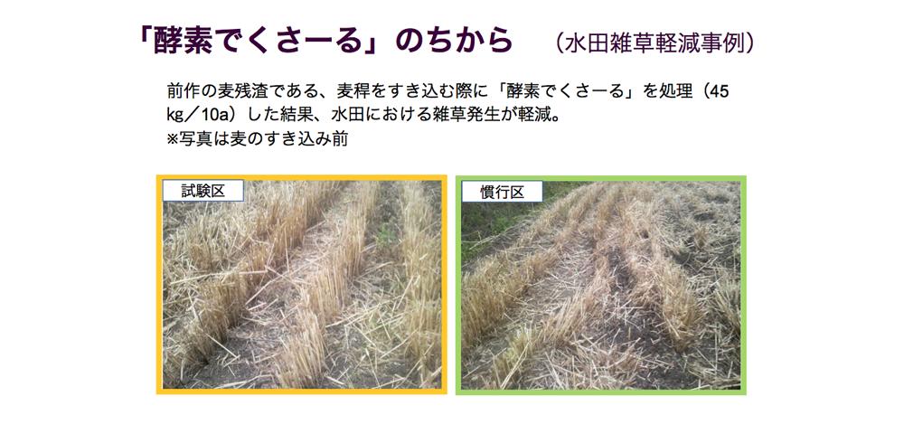 酵素でくさ~るのちから 水田雑草軽減事例