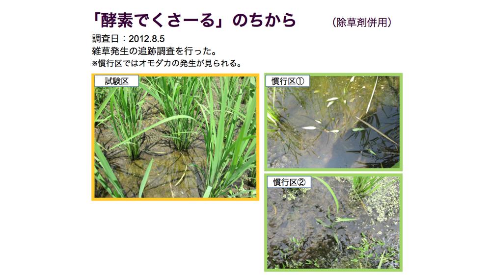 酵素でくさ~るのちから 除草剤併用(調査日:2012.8.5 )