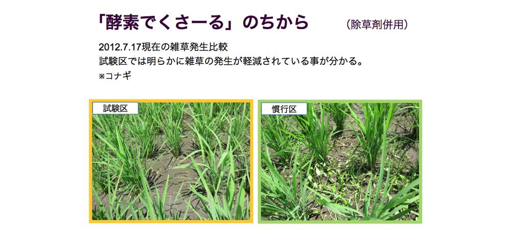 酵素でくさ~るのちから 除草剤併用(2012.7.17の雑草発生比較 )